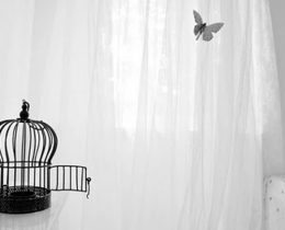 Amor é ninho e não gaiola
