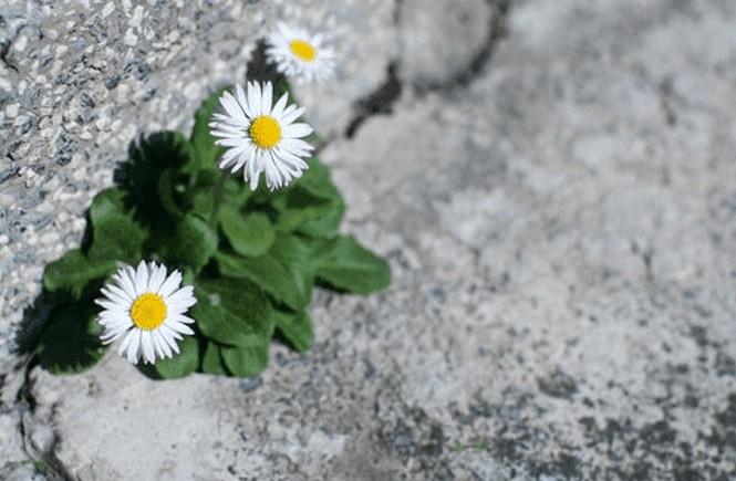 Floresça em meio ao caos